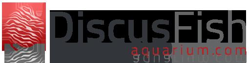Discus Fish Aquarium